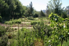 mart garden2
